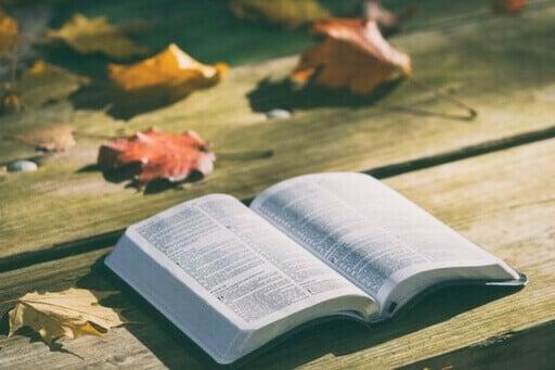 Un livre ouvert sur une table en bois. Des feuilles mortes sont également sur cette table